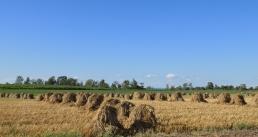 Amish Hay Field Glen NY