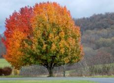 Rainbow Tree Glen NY